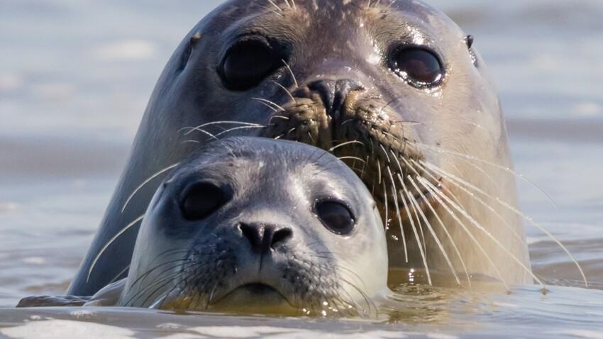Voyage en France : nos 11 endroits préférés pour voir des animaux sauvages