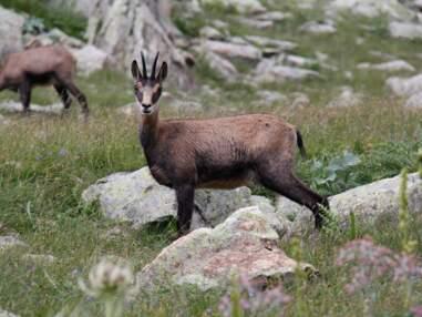 9 endroits pour voir des animaux sauvages en France