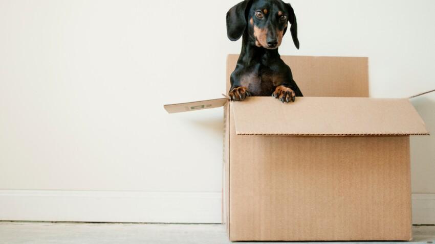 5 endroits où récupérer des cartons de déménagement gratuits