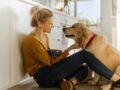 Animal de compagnie : vos droits et obligations lors d'une adoption