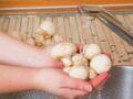 Faut-il laver les champignons de Paris ?