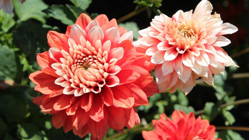 Quelles fleurs planter pour égayer son jardin au printemps ?