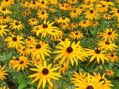 """Jardin : notre sélection de 6 plantes vivaces estivales """"tout-terrain"""""""