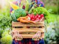 Potager : 5 légumes faciles à cultiver