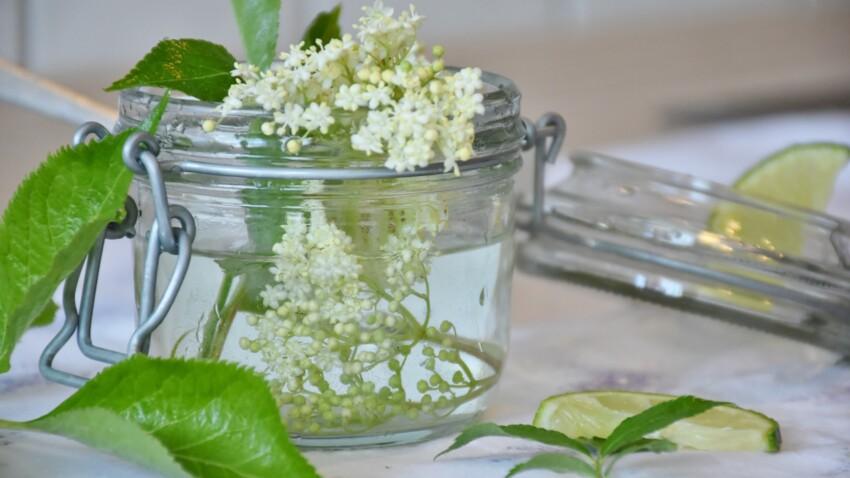 Nos meilleures idées recettes à base de fleurs de sureau