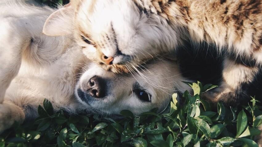 Mutuelle santé pour animaux : tout ce qu'il faut savoir