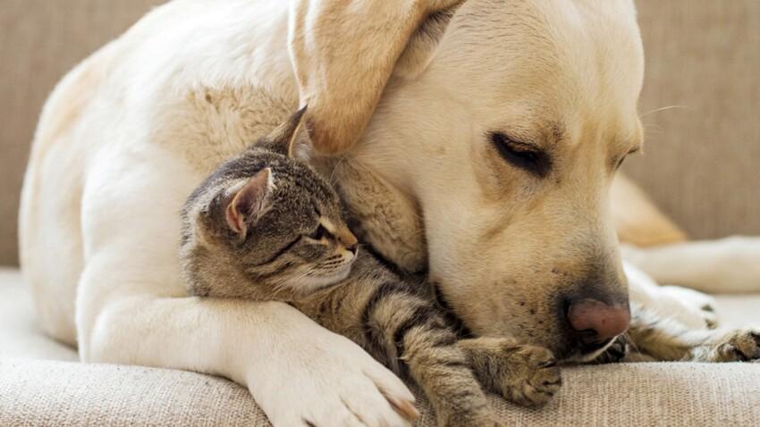10 idées reçues sur la garde d'animaux entre particuliers