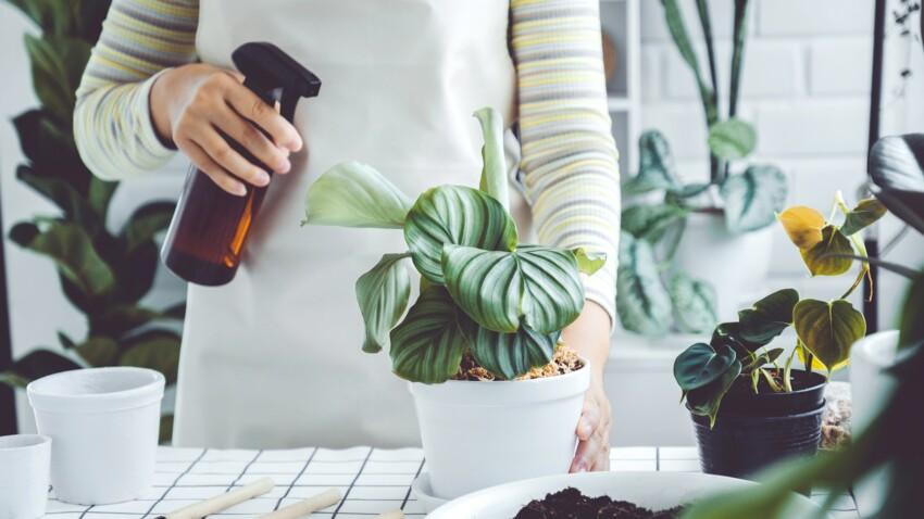 Quel est le meilleur moment pour arroser ses plantes ?