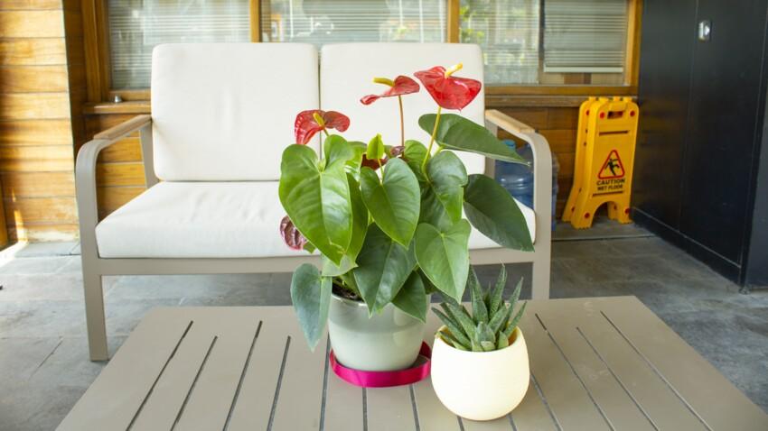 Sortir ses plantes d'intérieur en été : les bons réflexes