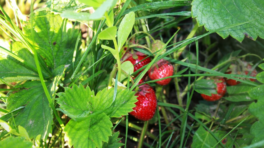3 fruits faciles à cultiver