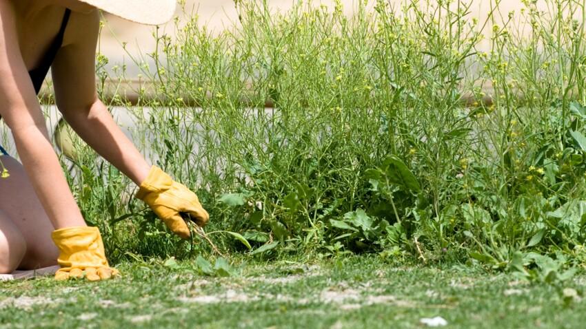 Pissenlit, ortie... 5 mauvaises herbes qu'il ne faut surtout pas arracher !