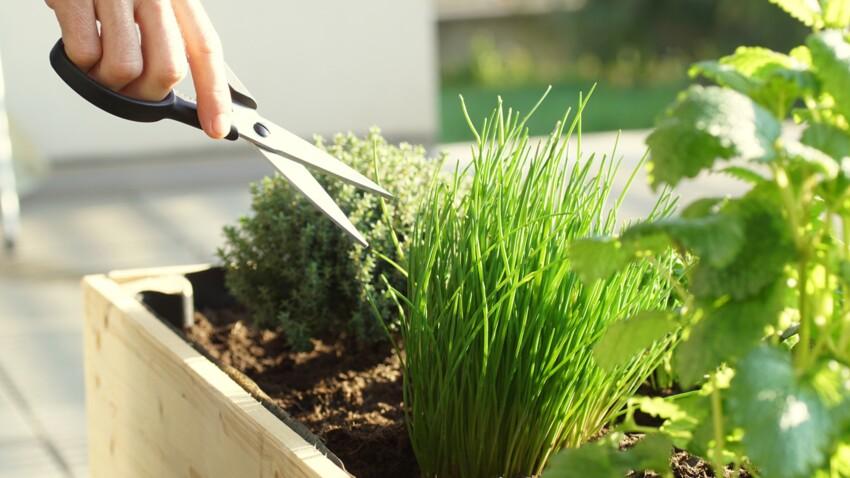 Les meilleurs conseils d'experts pour bien planter, arroser et tailler ses plantes aromatiques