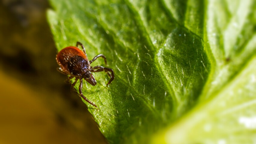 Maladie de Lyme : comment éviter les morsures de tiques ? Les conseils de Michel Cymes
