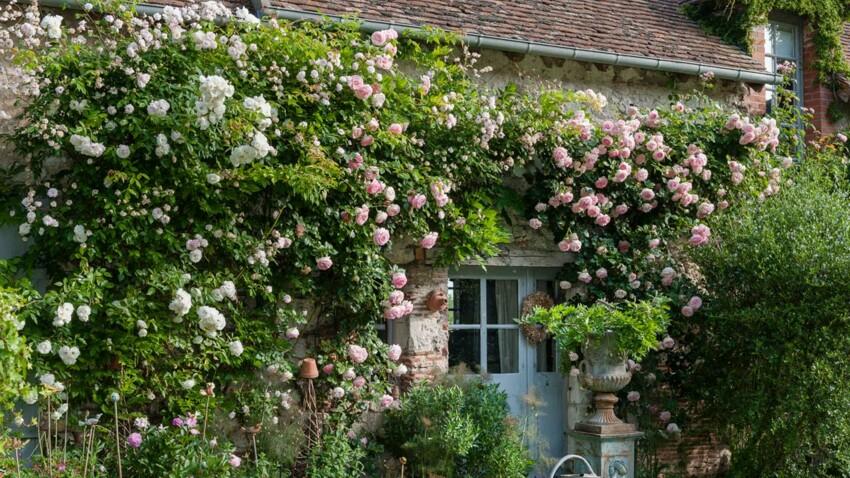 15 plantes du jardin qui embaument l'été