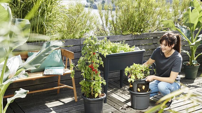 Comment créer un micro-potager sur mon balcon ?