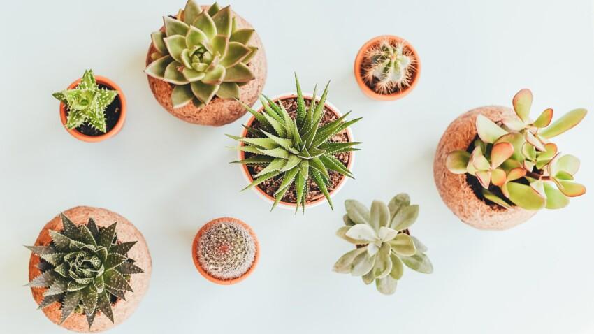 Tous les conseils d'experts pour bien arroser ses plantes d'intérieur (et les faire vivre longtemps)
