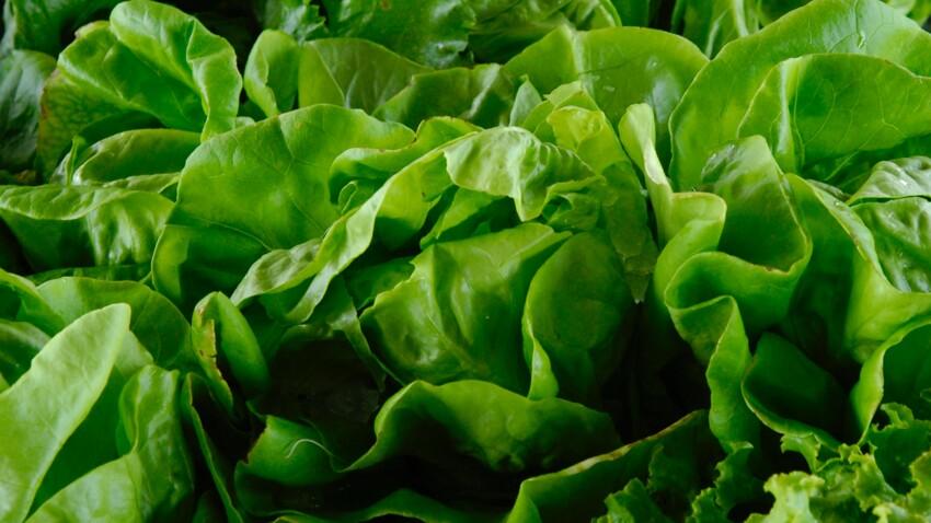 Ces erreurs à ne pas faire avec la salade