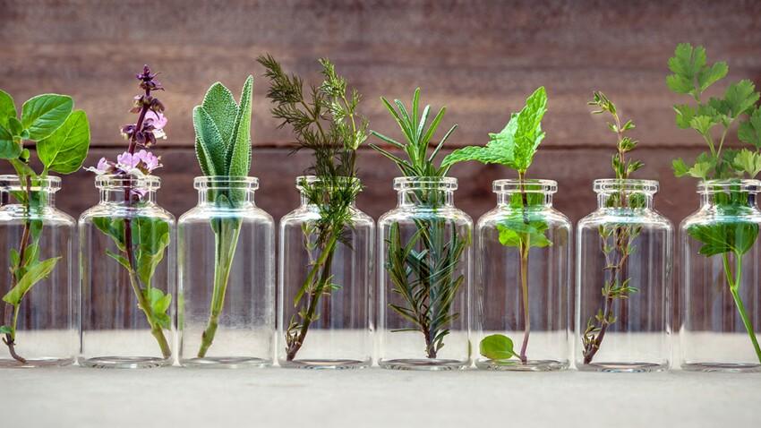 Herbes aromatiques : comment les cuisiner et les conserver
