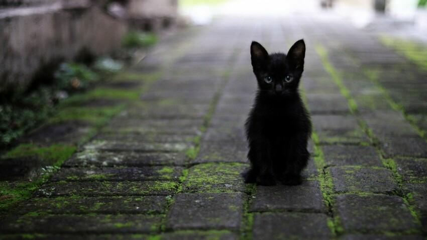 Comment venir en aide aux chats des rues et des refuges ?