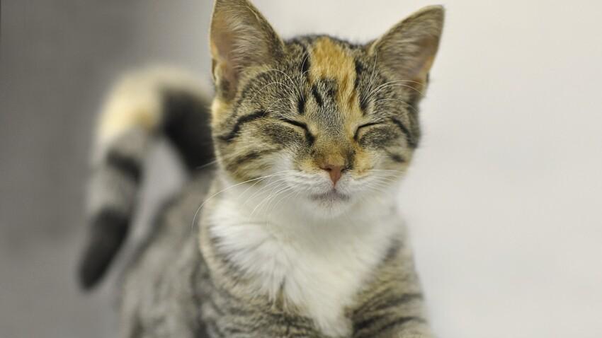 Tout ce qu'il faut savoir avant d'adopter un chat en refuge