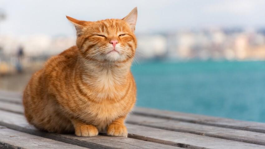 5 astuces faciles pour protéger votre chat des fortes chaleurs