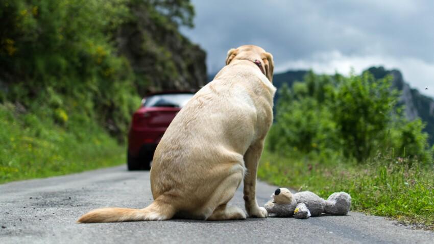La SPA dénonce une hausse des abandons d'animaux cet été et lance un appel à l'aide