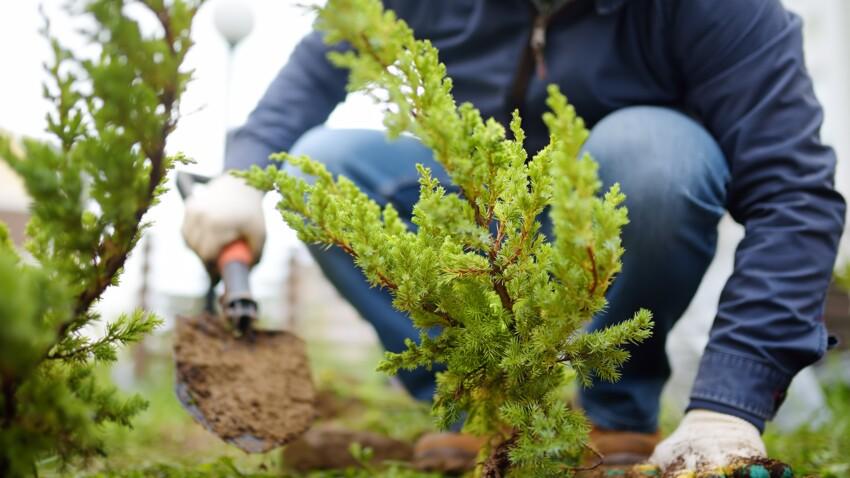 3 conseils pour bien choisir ses plantes d'extérieur en fonction de l'exposition