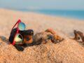 Un sondage révèle ce que les Français font de leurs animaux quand ils partent en vacances d'été