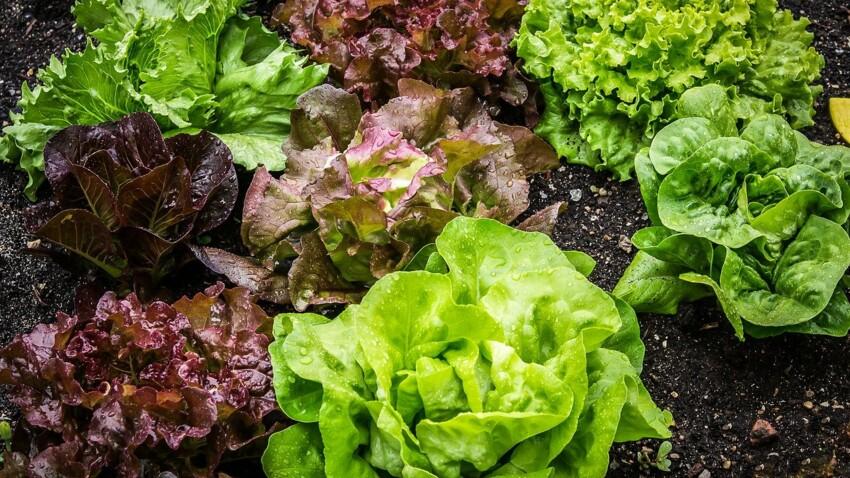 Nos conseils pour choisir une salade saine