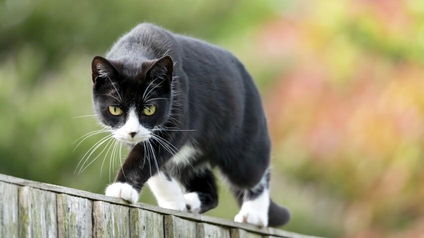 6 astuces pour éloigner les chats de notre jardin