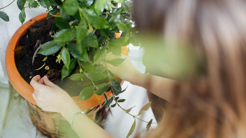 Fabriquer un gel d'arrosage maison pour ses plantes