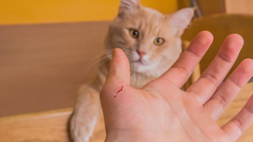 Griffure de chat : comment réagir et dans quels cas consulter ?