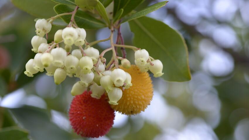Arbouse : quels sont les bienfaits santé de ce fruit ?