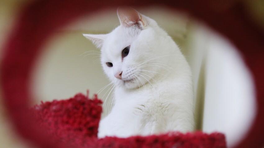 Disparition inquiétante : une femme de 83 ans retrouvée grâce à son chat