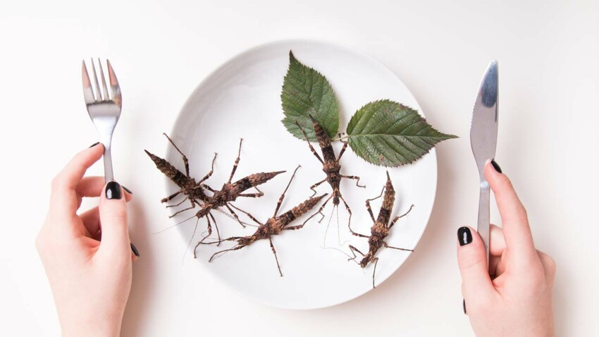 À table, sortez les assiettes… et les vers !
