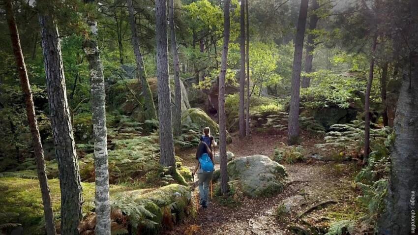 7 idées de randonnées au Pays de Fontainebleau
