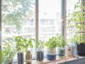 Jardin médicinal : 6 plantes à toujours avoir chez soi