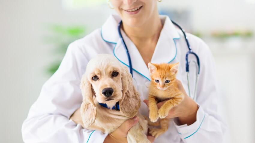 Soigner son chien ou son chat : combien ça coûte ?