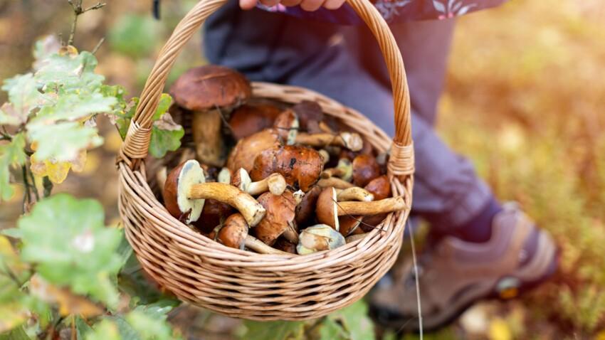 Intoxication aux champignons : les bons réflexes à adopter lors de la cueillette pour prévenir les risques