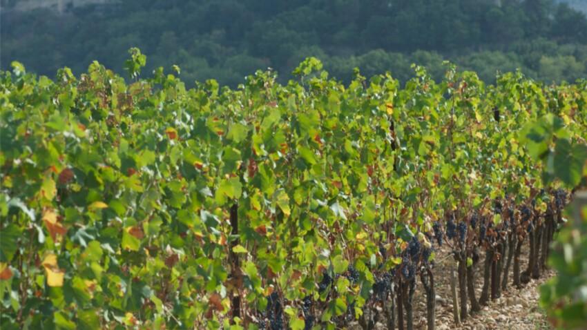 20 escapades insolites dans les vignes