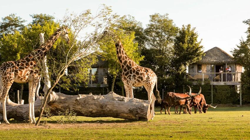 5 parcs animaliers pour passer la nuit avec des animaux sauvages