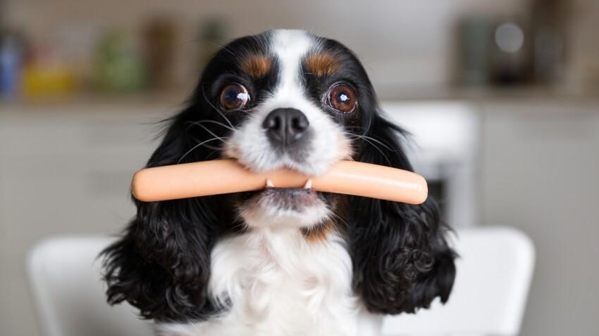 6 aliments qu'il ne faut surtout pas donner à manger à son chien