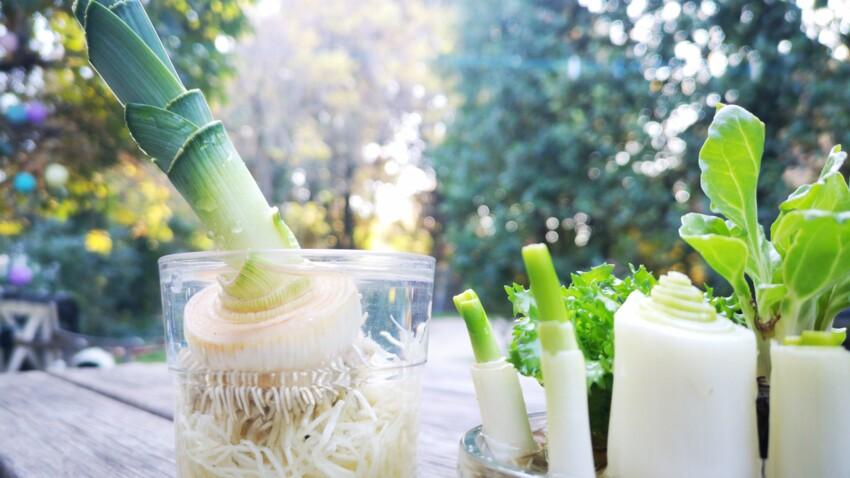 5 légumes à faire pousser sans terre
