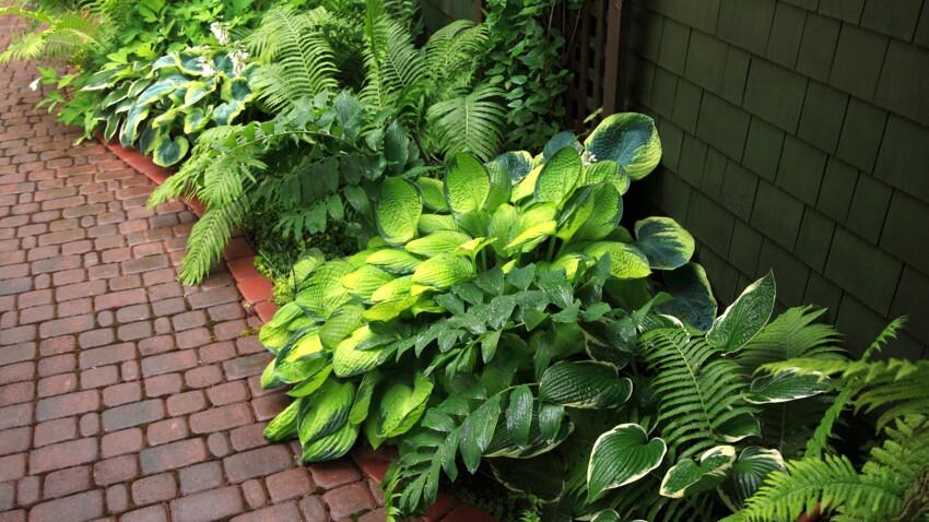 5 conseils pour planter des fougères au jardin