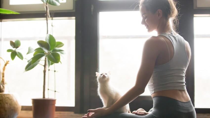 Offrez-vous des cours de yoga... avec votre chat !