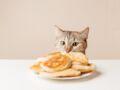 6 aliments qu'il ne faut surtout pas donner à manger à son chat