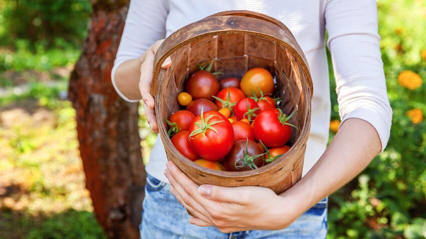Nos conseils pour faire pousser des tomates facilement