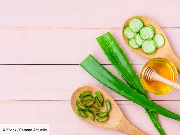 Aloe vera : comment l'utiliser sur les cheveux ?