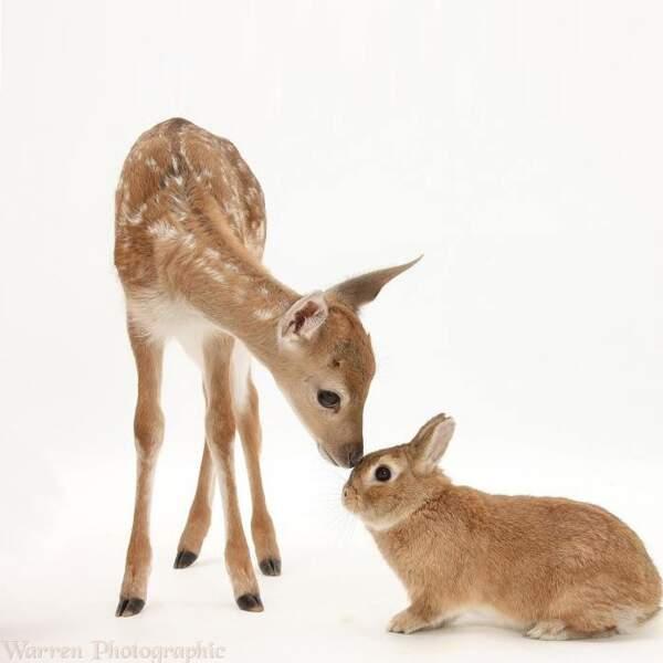 Bambi et Panpan feraient-ils partie de la même famille ?