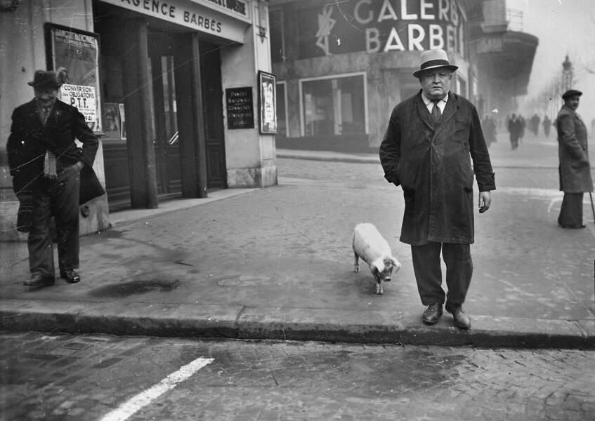 Cochon dans la rue, décembre 1941.